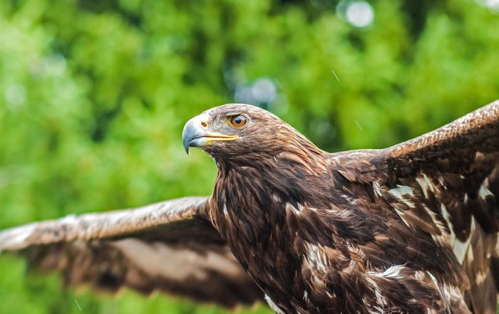 Eagle flying - The Real Potential of Non-Executive Directors